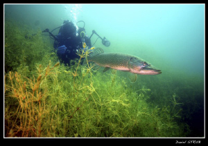 Fisrt Pike since long time !!! great dive. by Daniel Strub